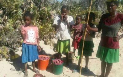 SUD DE MADAGASCAR – Crise alimentaire en pleine crise sanitaire